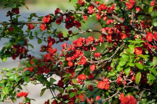 Immagine gratuita di albero, fioritura, giardino