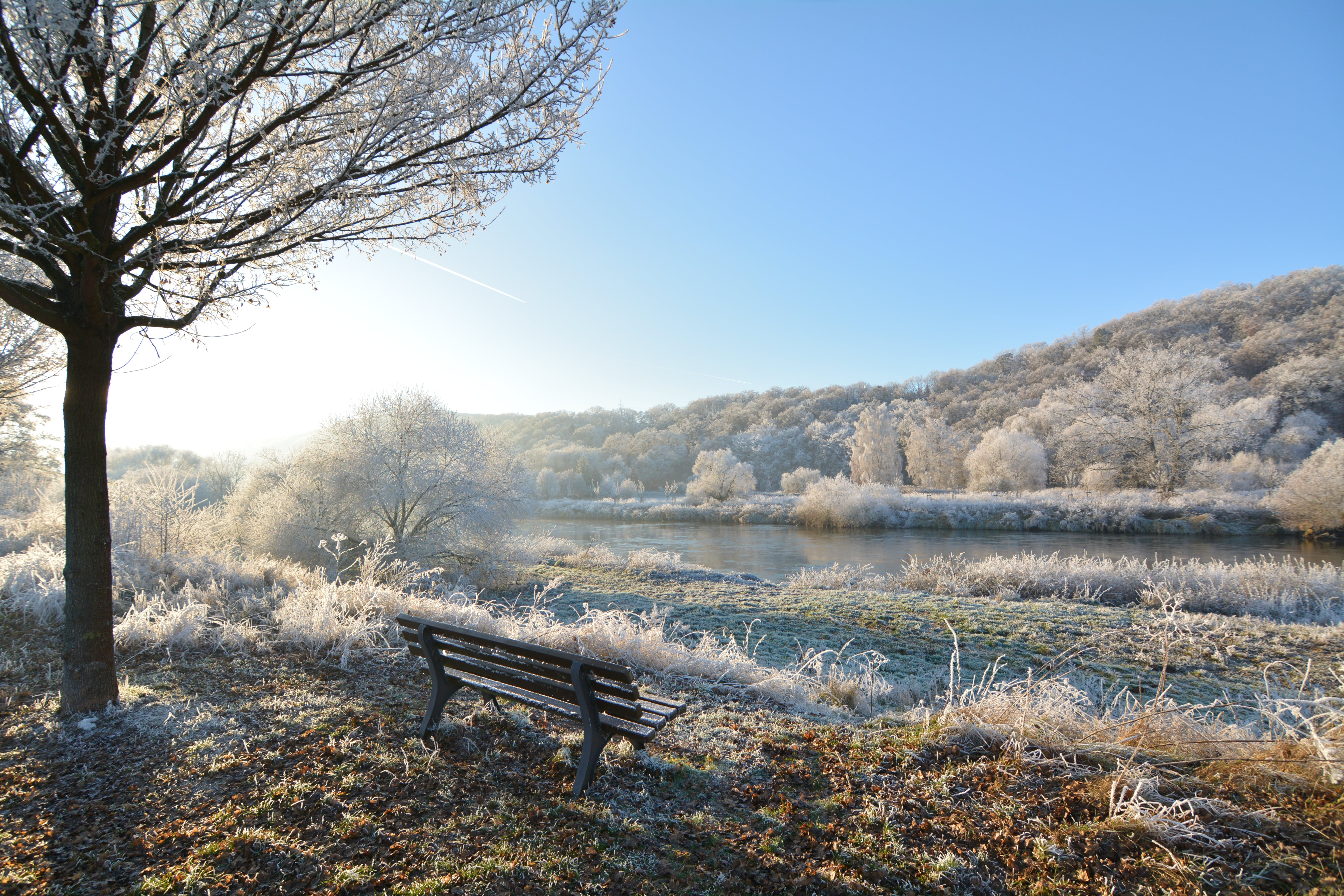 Brown Wooden Bench Beside Tree Near River