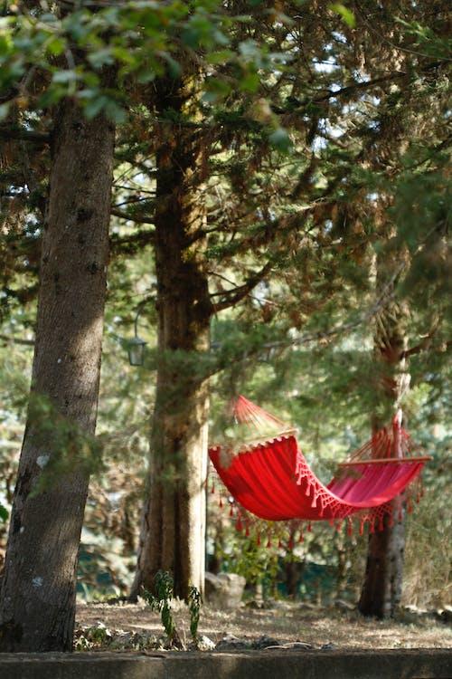 Immagine gratuita di amaca, estate, foresta