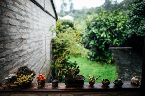 Succulents on Wooden Balustrade