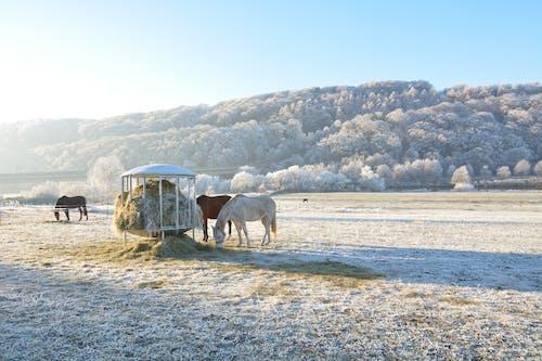 Fotobanka sbezplatnými fotkami na tému cicavec, farma, horizontálna rovina, hracie pole