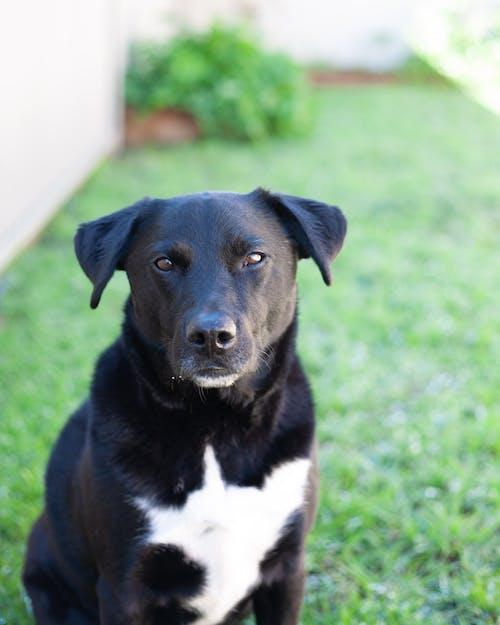 갈색 눈, 강아지, 개, 개의의 무료 스톡 사진