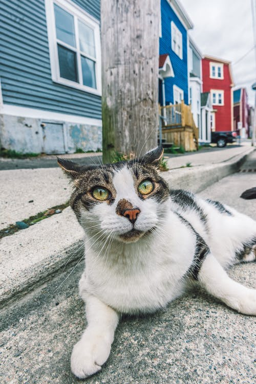 Close-up Photo of White and Gray Cat Lying Down by Curb