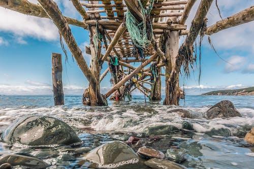 Безкоштовне стокове фото на тему «бамбук, берег моря, великий план»