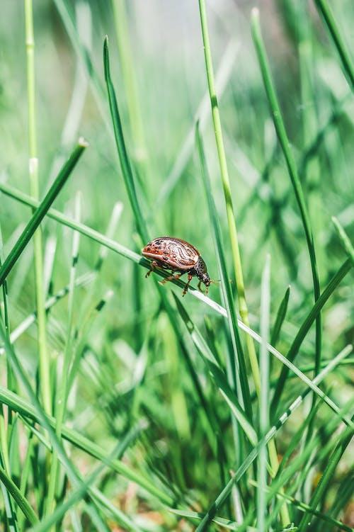 Gratis stockfoto met gras, insect, insectenfotografie, jong