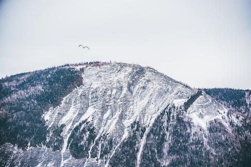 Птица в полете над горой