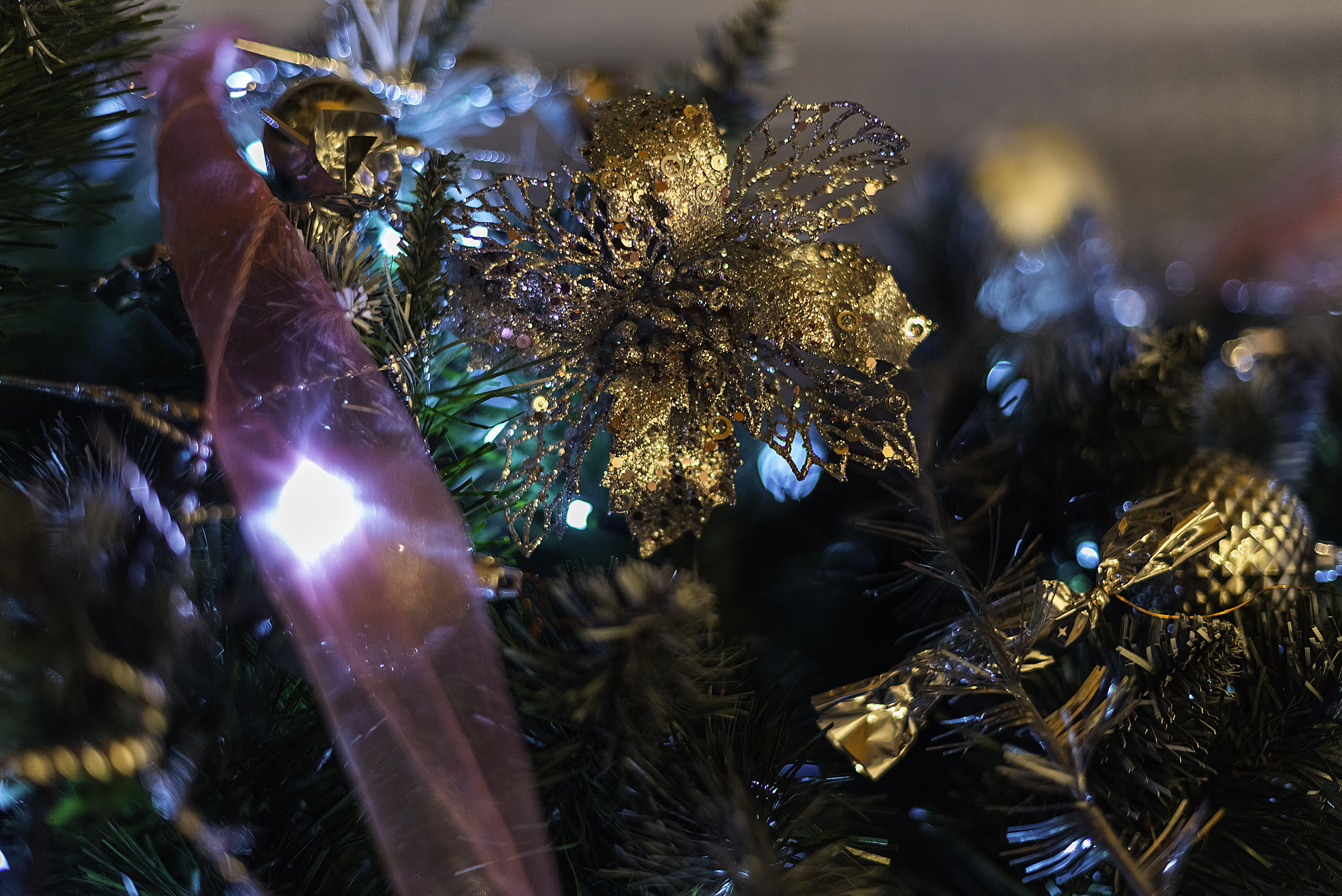 光, 光反射, 分公司, 季節 的 免费素材照片