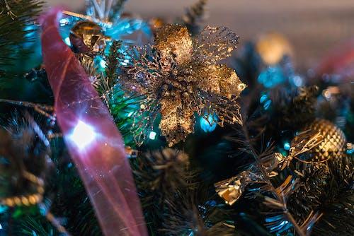 Imagine de stoc gratuită din anotimp, arbore, aur, auriu