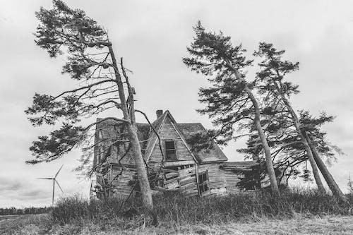 Бесплатное стоковое фото с буря, ветер, ветреный, дерево
