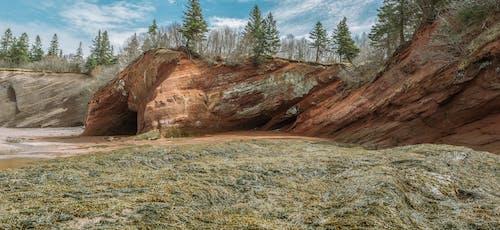 Ingyenes stockfotó fák, festői, fű, geológia témában