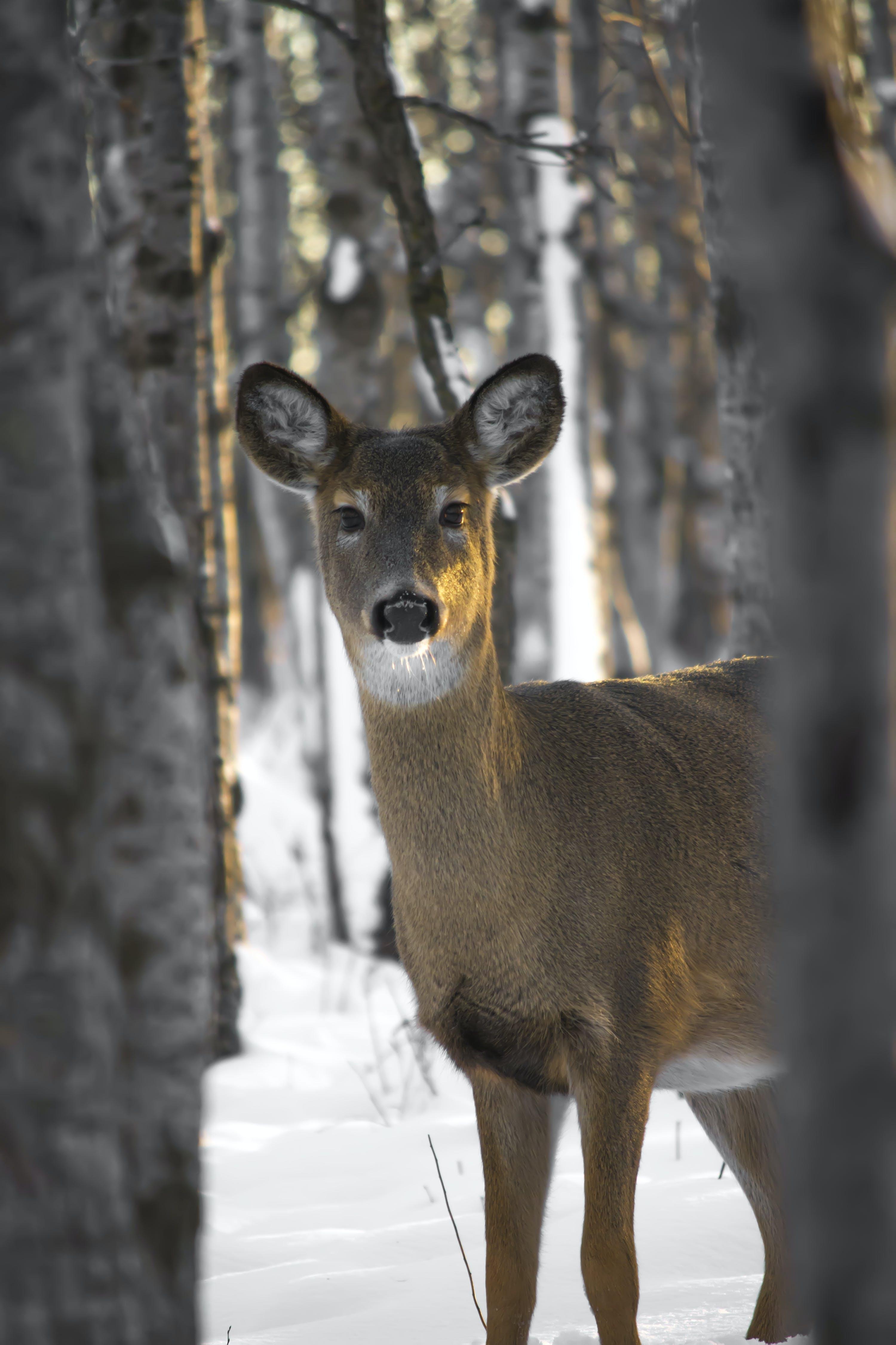 Brown Deer Under Trees