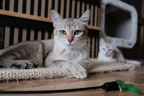 Foto d'estoc gratuïta de adorable, Ajagut, animal, animal domèstic