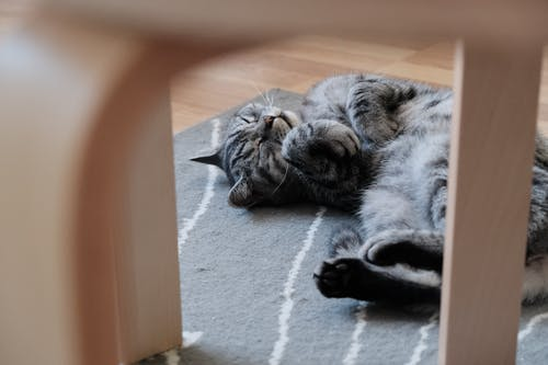 Photo Of Cat Lying Down
