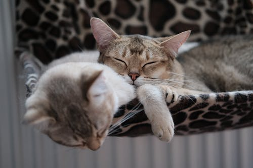 Photo Of Cats Sleeping Together