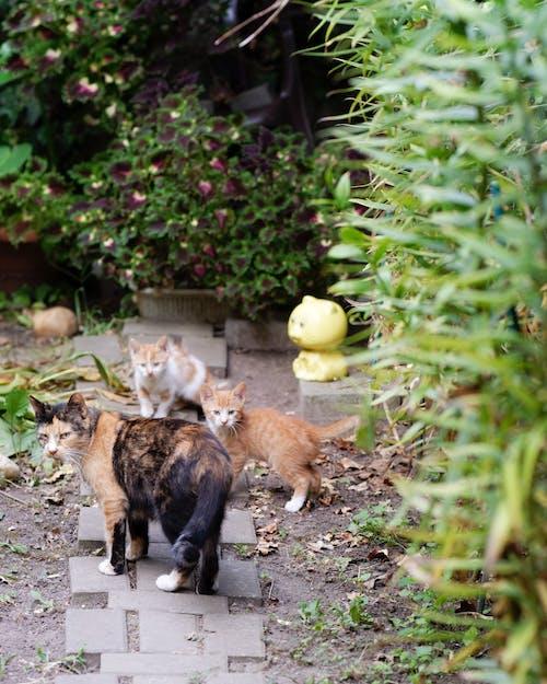 Darmowe zdjęcie z galerii z koci, kocięta, koty, natura