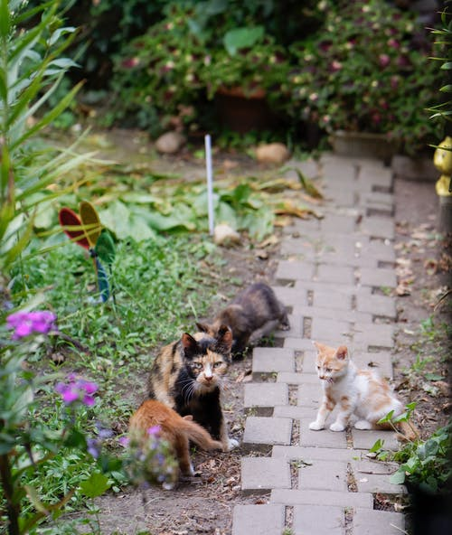 Darmowe zdjęcie z galerii z koci, kocięta, koty, kwiaty