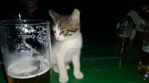 Gratis lagerfoto af aften, dyr, kat, klog