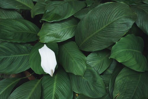 漂亮, 美麗的花 的 免費圖庫相片
