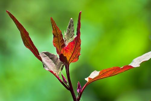Immagine gratuita di bel fiore, calma, dal lago, kashmir