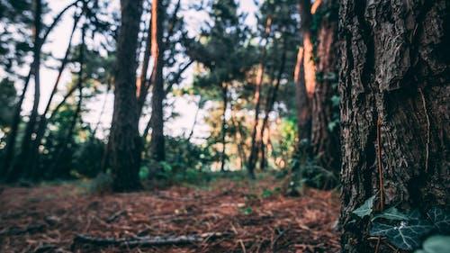 Ảnh lưu trữ miễn phí về bosco, cây cao, thảm cỏ xanh, tiêu điểm