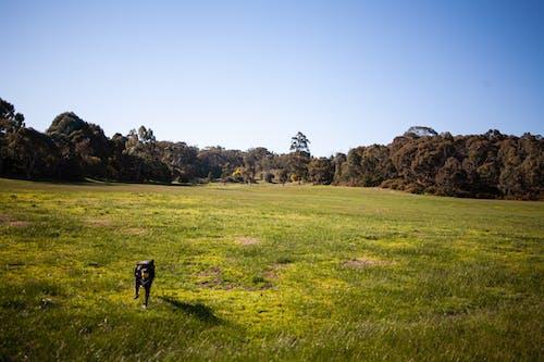Kostenloses Stock Foto zu bäume, blauer himmel, erholung, gras