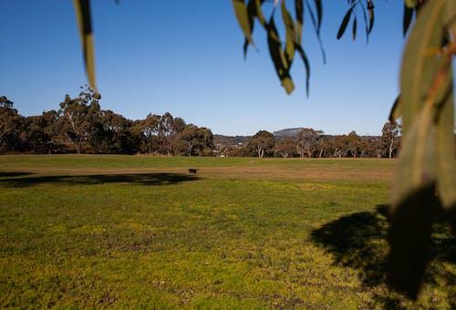 Kostenloses Stock Foto zu australien, australische landschaft, gras, grün