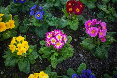 꽃, 나뭇잎, 노란색, 녹색의 무료 스톡 사진