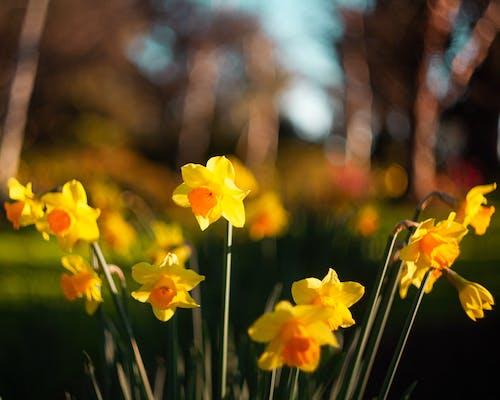 간질, 꽃잎, 노란색, 녹색의 무료 스톡 사진