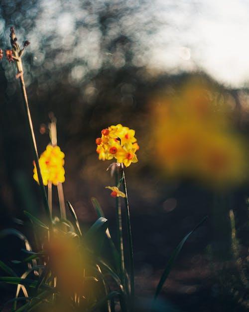 backgrounf, 관념적인, 꽃, 노란색의 무료 스톡 사진