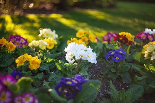 꽃, 꽃잎, 나뭇잎, 노란색의 무료 스톡 사진