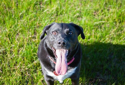 강아지, 개, 개의, 검은 개의 무료 스톡 사진