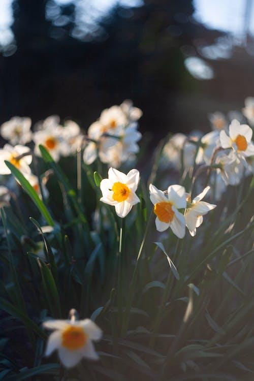 꽃, 노란색, 녹색, 만개의 무료 스톡 사진