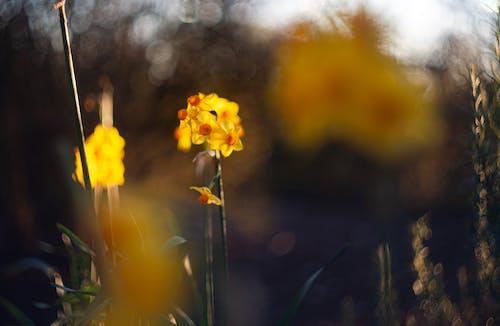 관념적인, 꽃, 노란색, 배경의 무료 스톡 사진