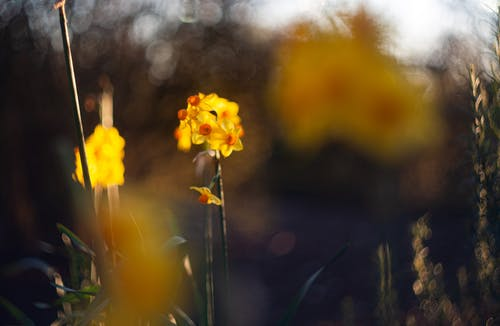 Kostenloses Stock Foto zu abstrakt, blumen, blüten, bokeh