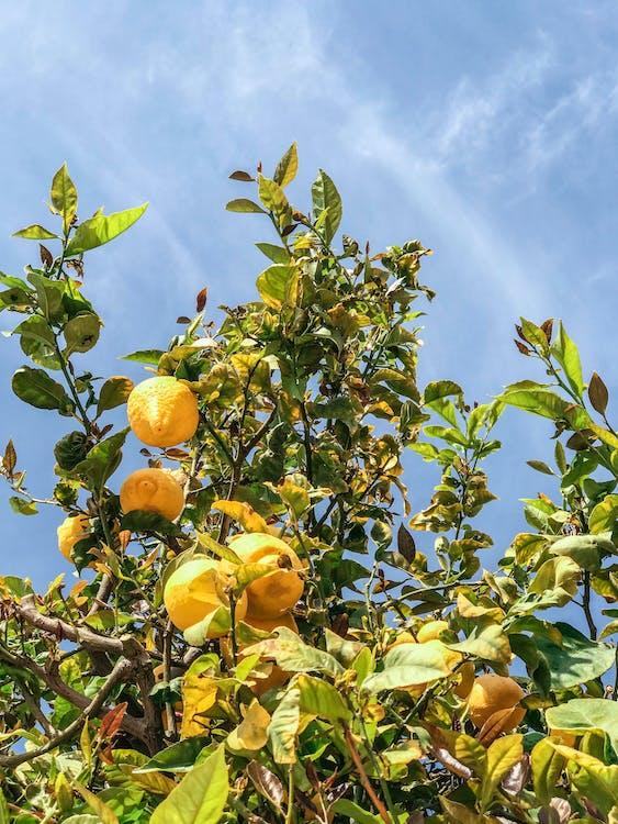 agrio, al aire libre, amarillo