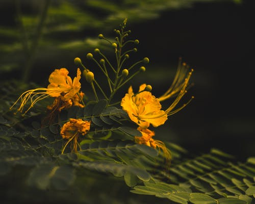 Free stock photo of beautiful flower, flower, moody, nature