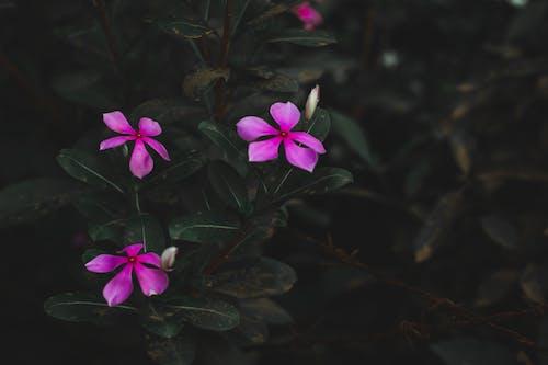 Free stock photo of beautiful flower, dark green, dark green plants, desaturated