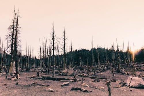 Imagine de stoc gratuită din amurg, apus, arborii căzuți