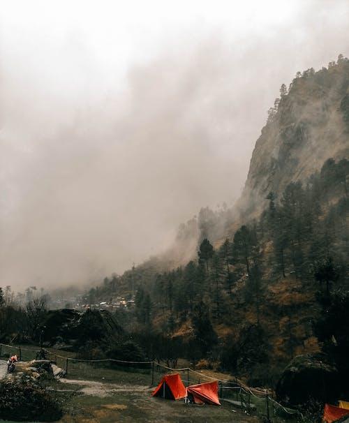 Imagine de stoc gratuită din apă, arbori, calamitate, călătorie