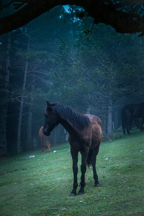 Photo of Brown Horse on green field
