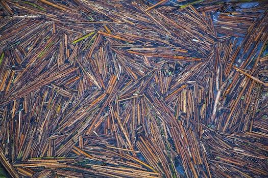 Free stock photo of art, water