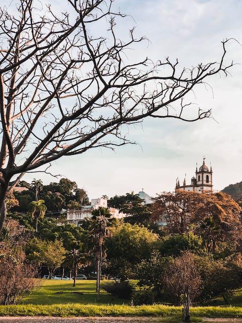 Foto d'estoc gratuïta de a l'aire lliure, arbres, arquitectura, castell