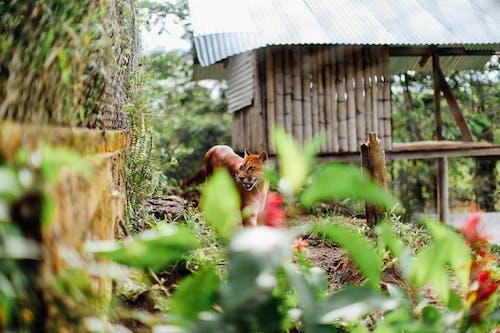 Imagine de stoc gratuită din animal, animal sălbatic, bambus, concentrare