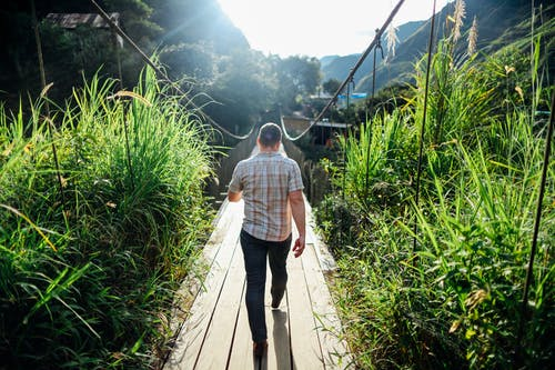 Fotos de stock gratuitas de caminando, cesped alto, de espaldas, hombre