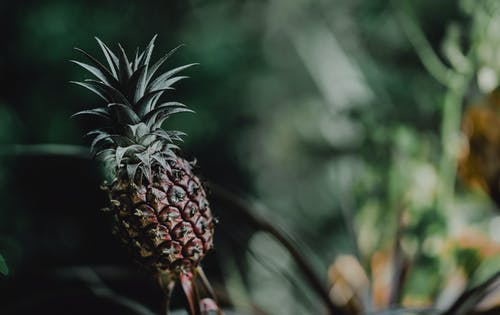 Selective Focus Photo of a Pineapple