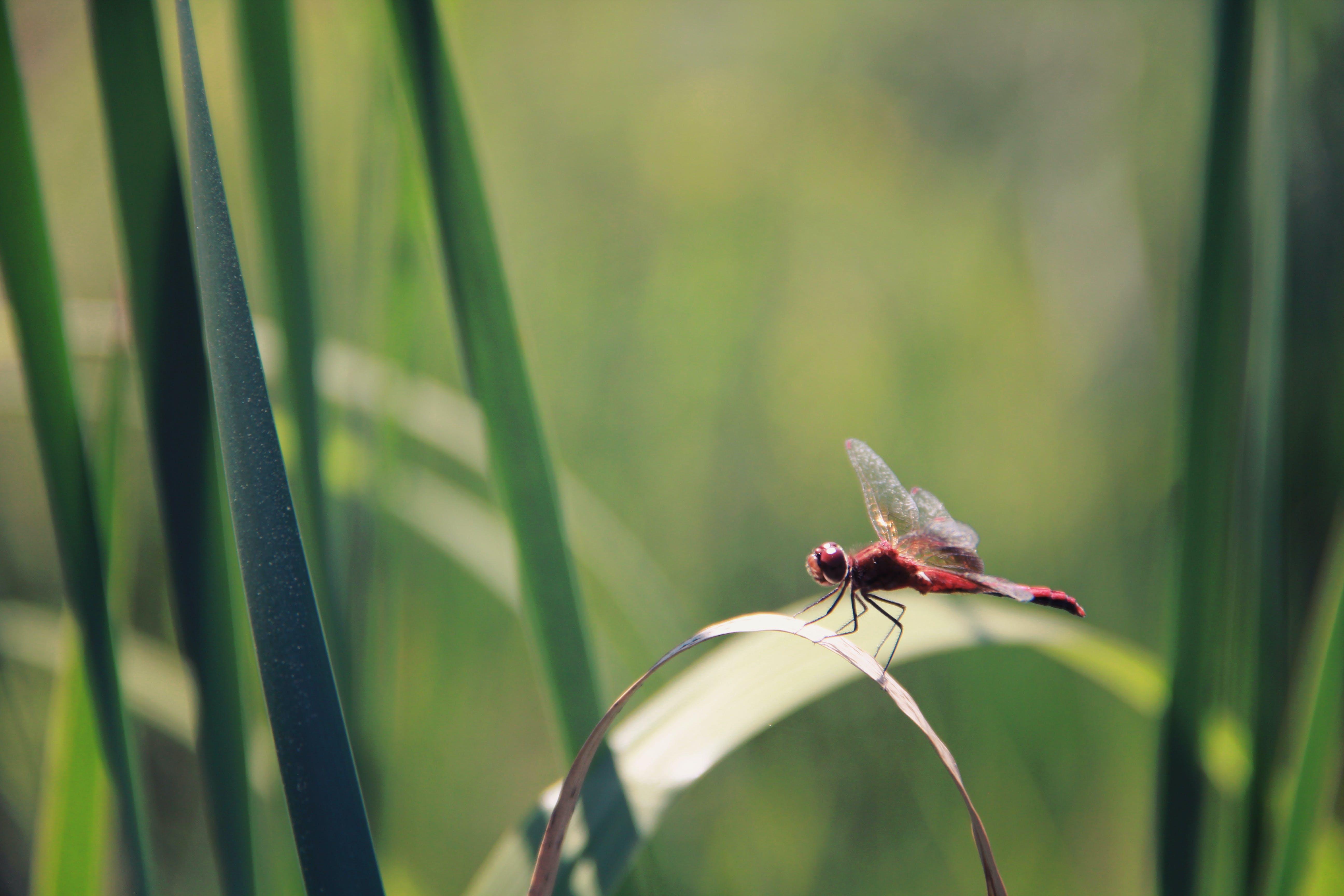 biology, blur, close-up