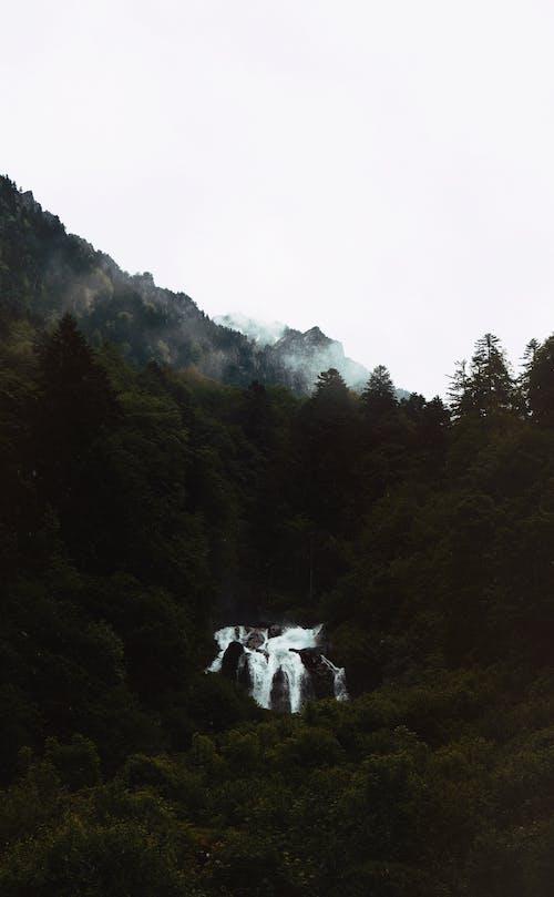 Foto profissional grátis de água, ao ar livre, árvores, aventura