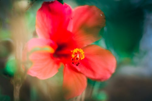 Free stock photo of 4k wallpaper, beautiful flowers, blue and red, blur