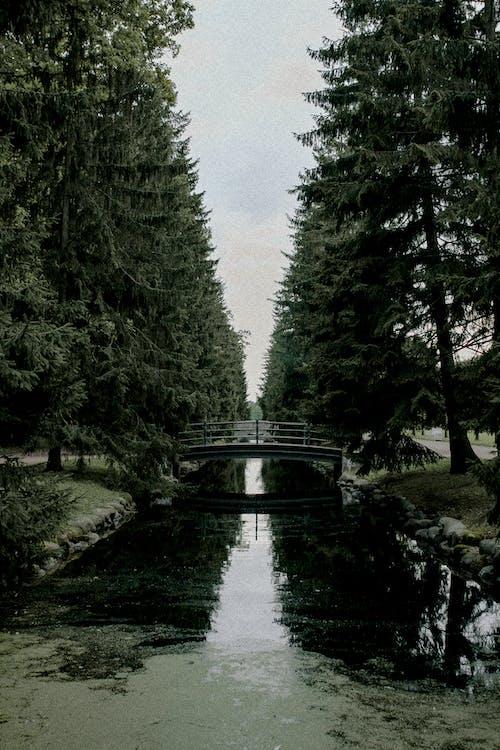 Безкоштовне стокове фото на тему «відображення, вода, Денне світло»