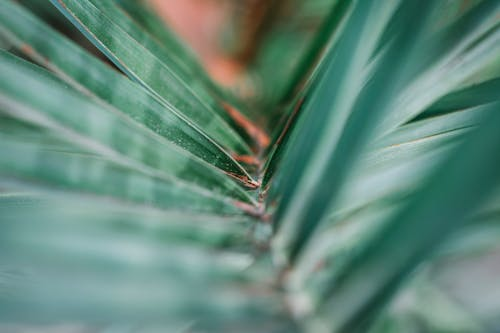 Free stock photo of 4k wallpaper, blur, close up, defocused